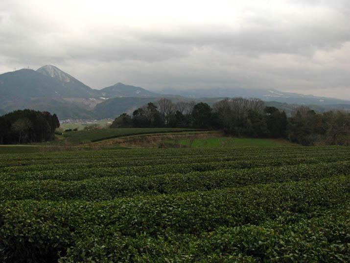 120307 隠れた大山と茶畑.jpg