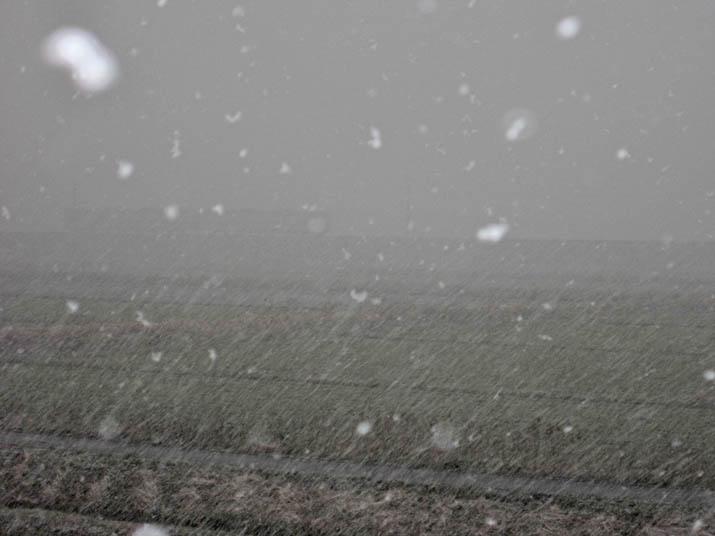 120312 雪で見えない山陰線列車.jpg