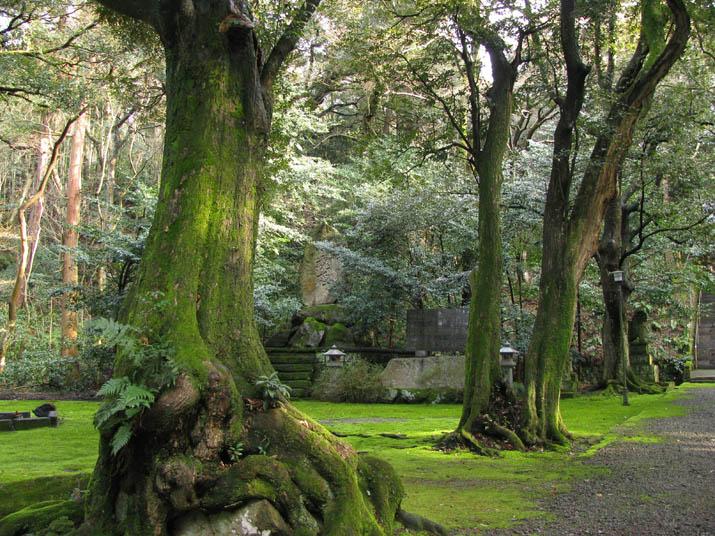 120326 日吉神社の木々.jpg