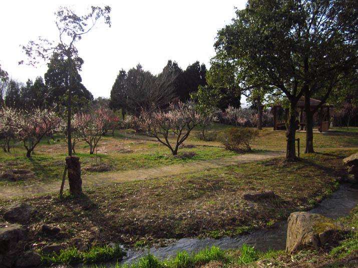 120401 旧米子ハイツの梅園.jpg