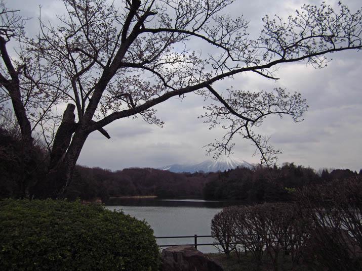 120407 開花を待つ岡成池の桜.jpg
