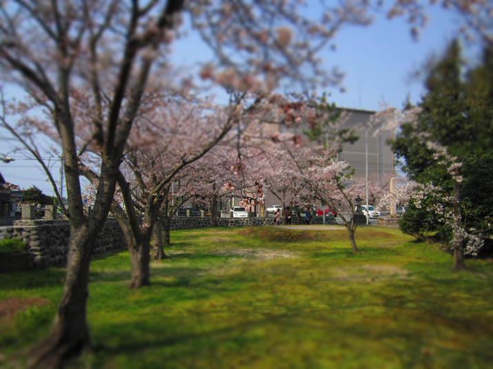 120408 桜咲く日吉神社の境内.jpg