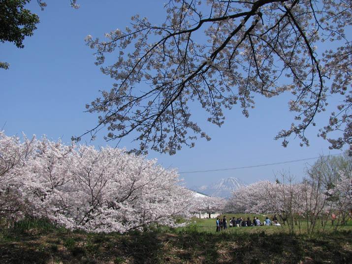 120413 大山と旧米子ハイツの桜.jpg