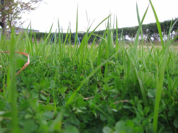 120420 緑の草が茂る.jpg