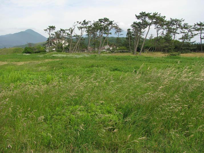 120530 海岸の草原.jpg