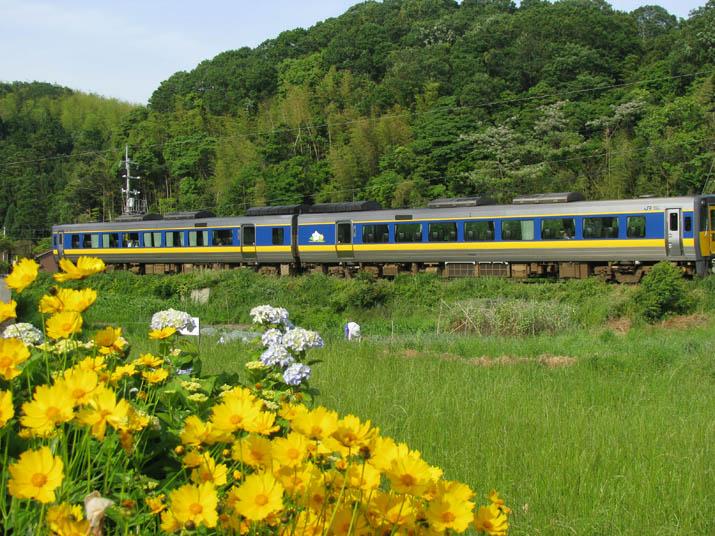 120601 花と山陰線特急列車.jpg