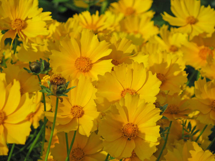 120604 黄色い花.jpg