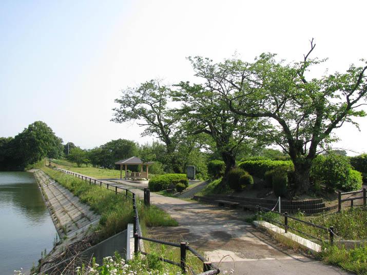 120614 初夏の岡成池.jpg