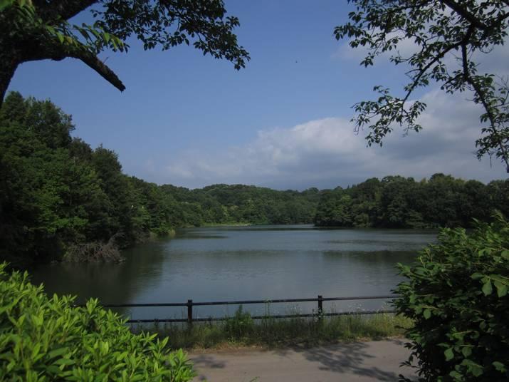 120617 岡成池と畔の森.jpg