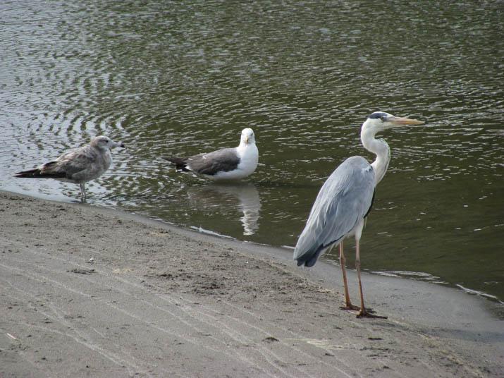 120626 水辺の鳥.jpg