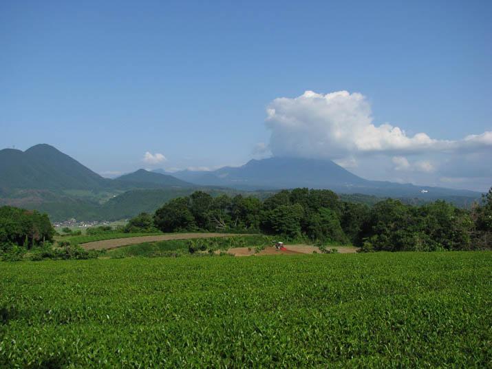 120628 大山と茶畑.jpg