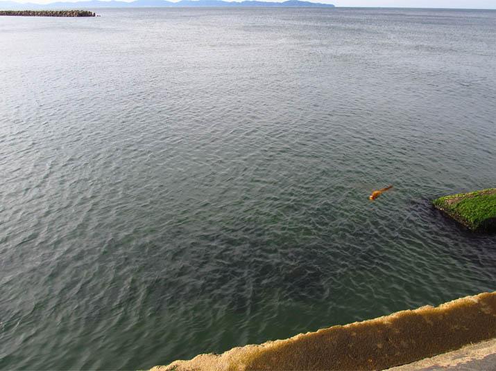 120827 穏やかな海と赤トンボ.jpg