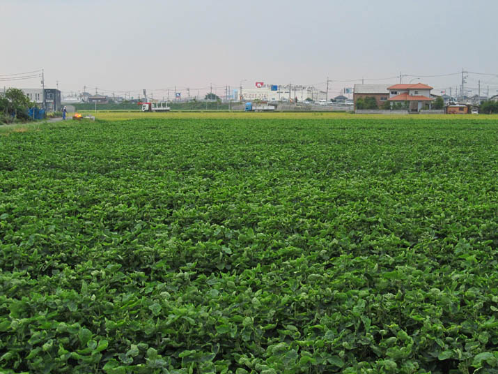 120914 休作は大豆栽培.jpg