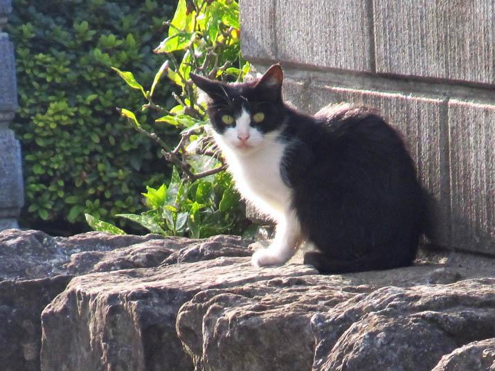 121015 白黒猫は警戒中.jpg