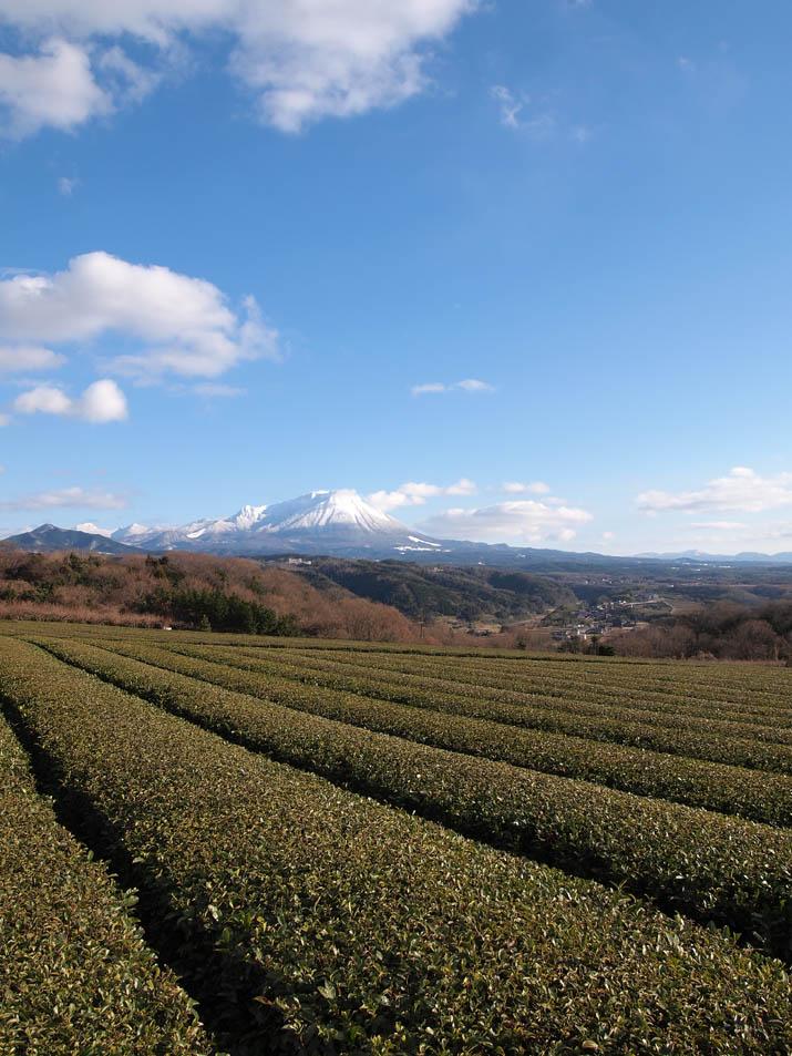 121227 大山と茶畑.jpg