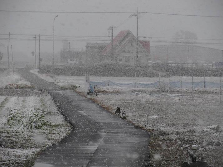 121231 雪が舞う農道.jpg
