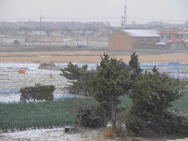 130126 午後の雪.jpg