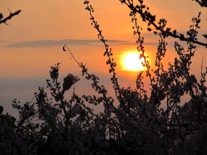 130328 梅の花と夕日.jpg