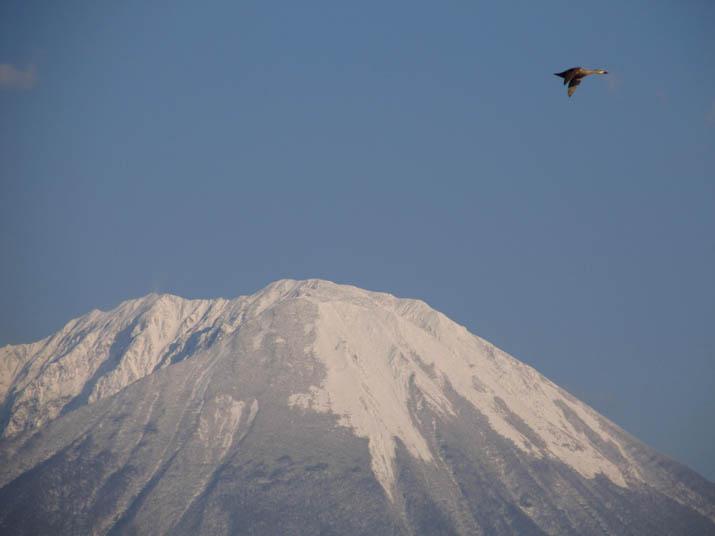 130411 大山山頂とカモdia2.jpg