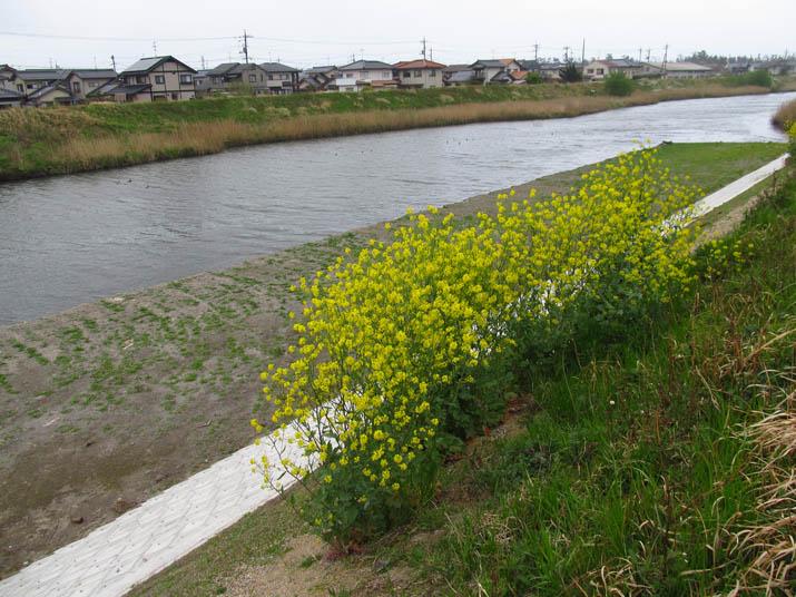 130417 工事の終わった佐陀川河口.jpg