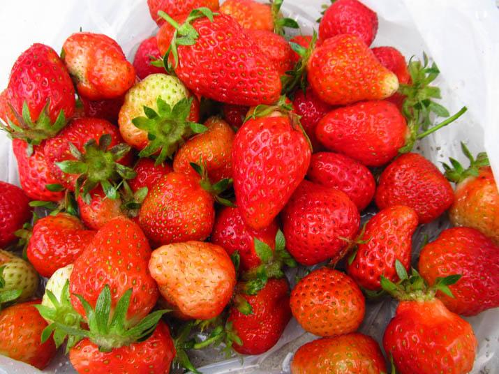 130511 苺の収穫.jpg