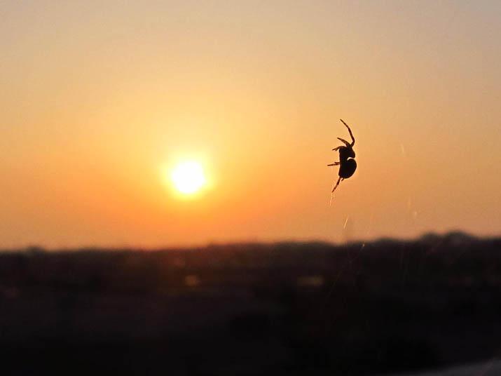 130521 窓に蜘蛛.jpg