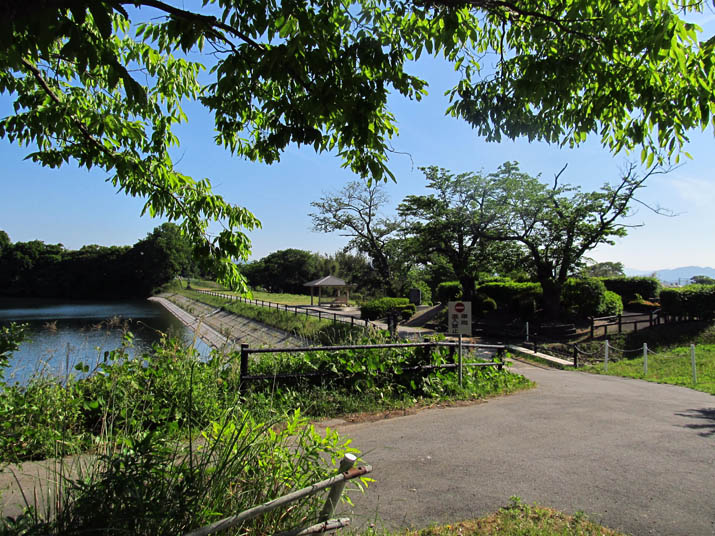130524 岡成池の遊歩道.jpg