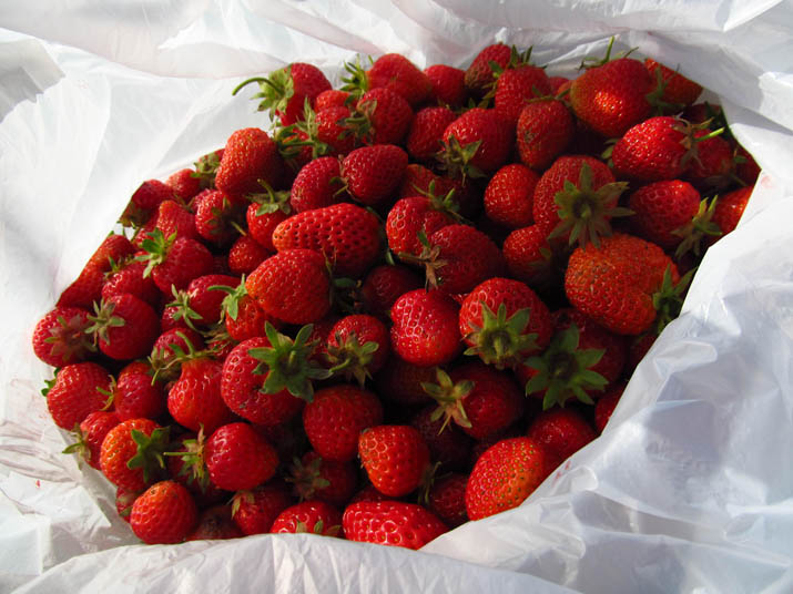 130530 苺の収穫.jpg