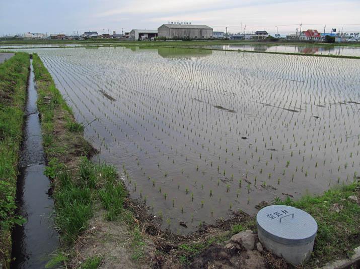 130531 水田地帯.jpg