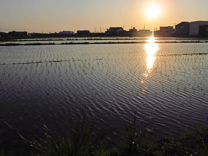 130607 水田の反射.jpg