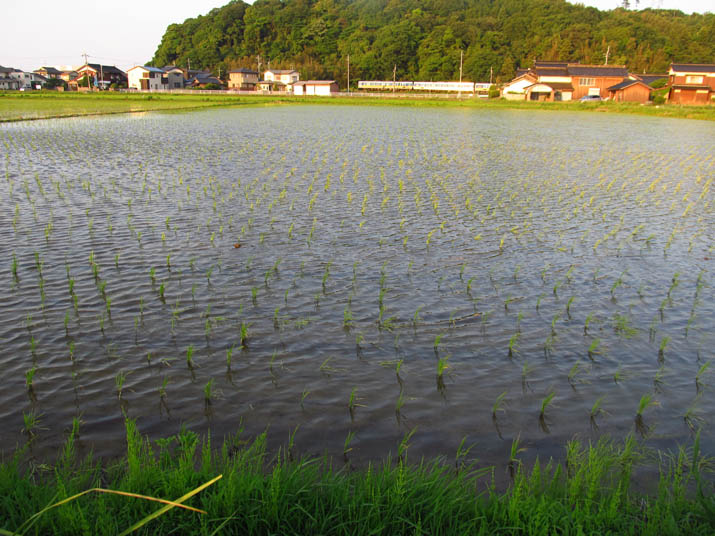 130607 水田と壷瓶山と特急列車.jpg