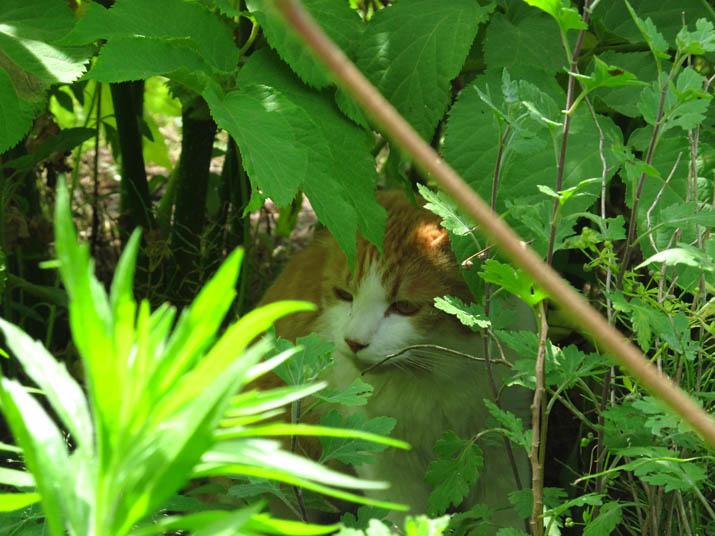 130608 フジちゃんは木の下に.jpg