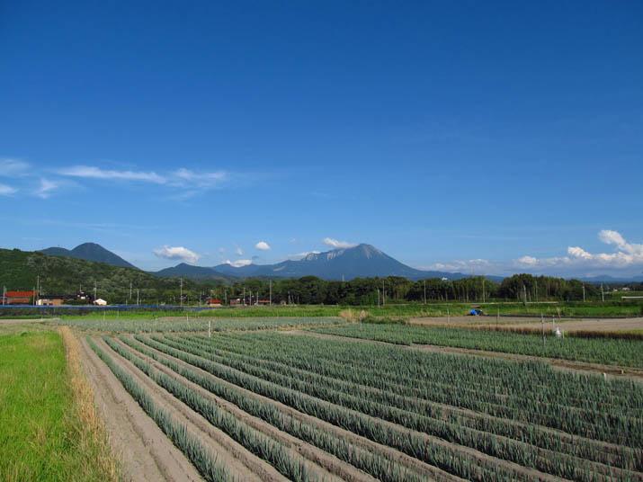130710 大山とネギ畑.jpg