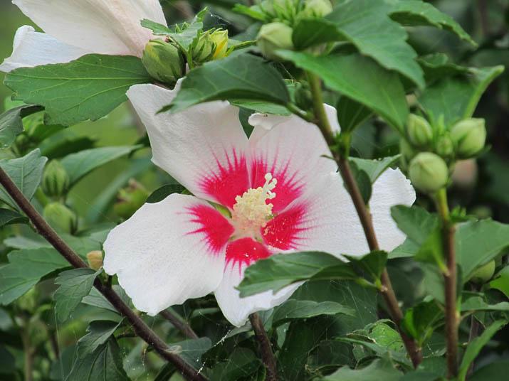 130728 トロピカルな花.jpg
