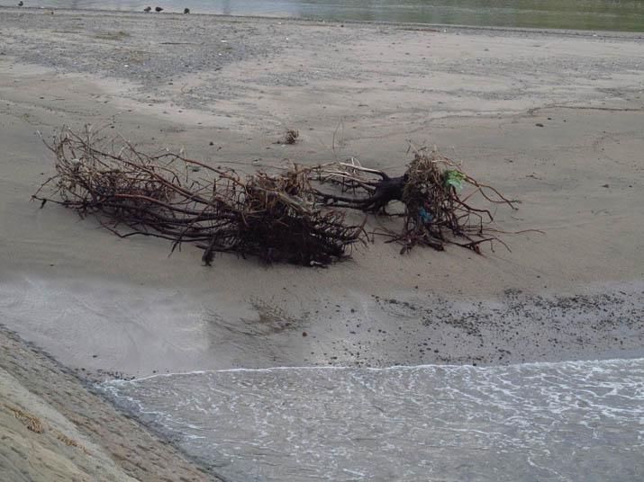 131017 大きな木の根.jpg