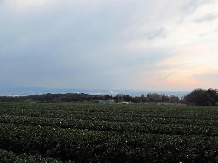 131211 茶畑と米子市街地.jpg