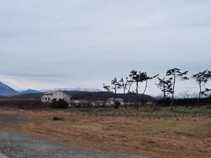 131227 防風林と大山.jpg