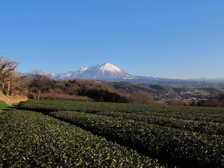 140126 茶畑と大山.jpg