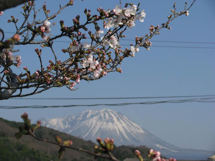 140329 大山と桜.jpg