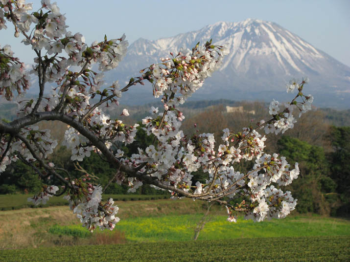 140404 桜と大山.jpg