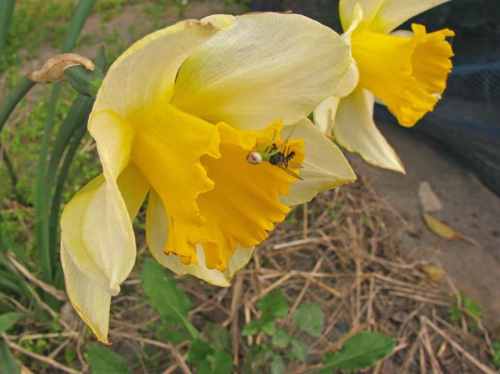 140416 花とクモ.jpg
