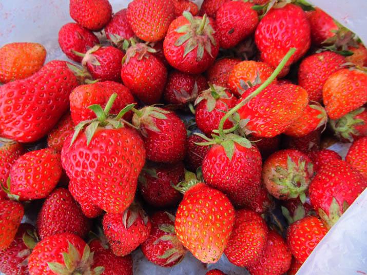 140517 イチゴの収穫.jpg