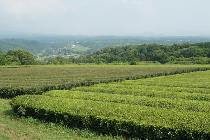 140701 茶畑と淀江.jpg