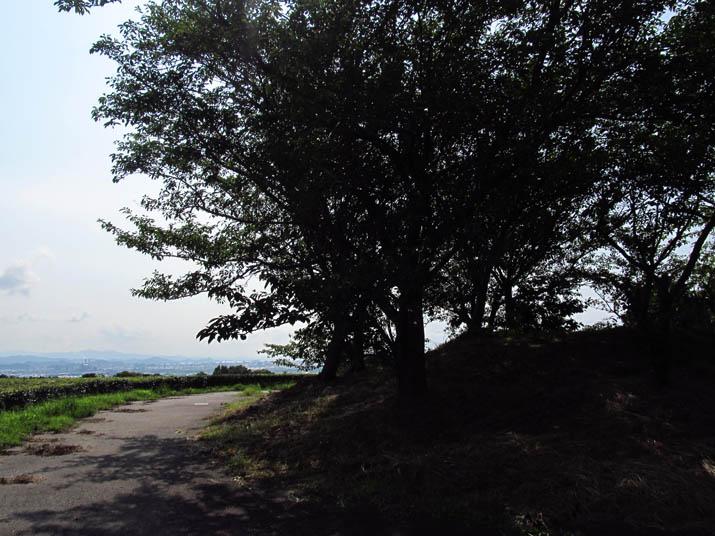 140724 壺瓶山の林.jpg