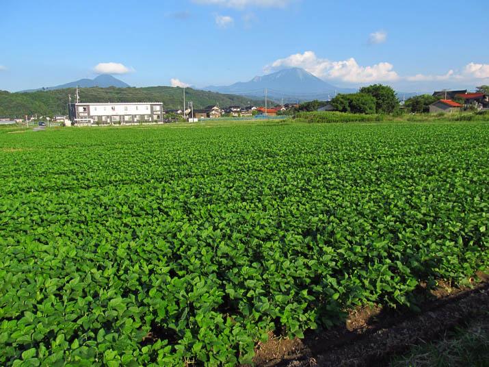 140908 大豆と大山.jpg