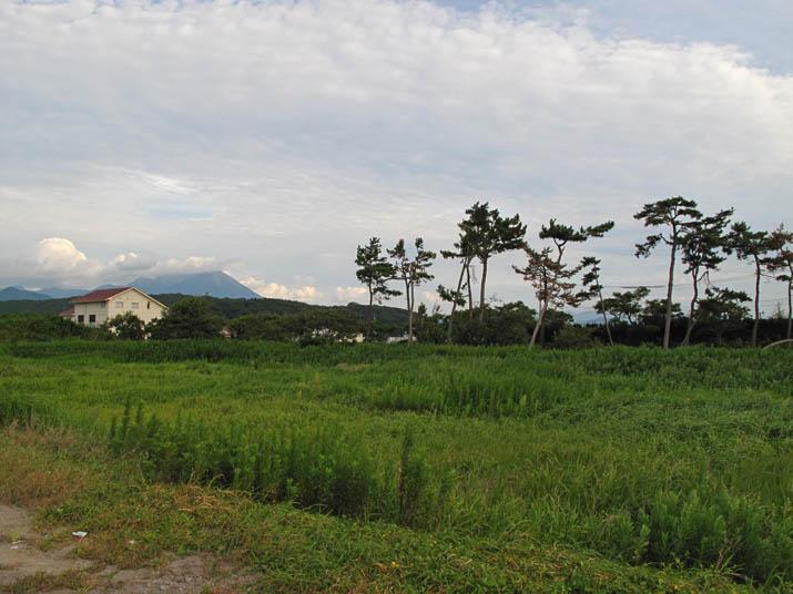 140918 大山と防風松.jpg