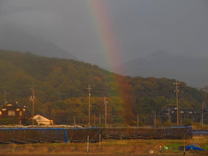 141118 ブルーベリー農園から伸びる虹.jpg