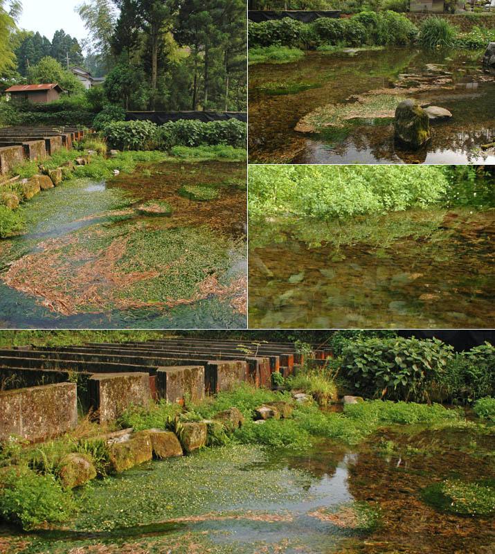本宮の泉 水辺と植物