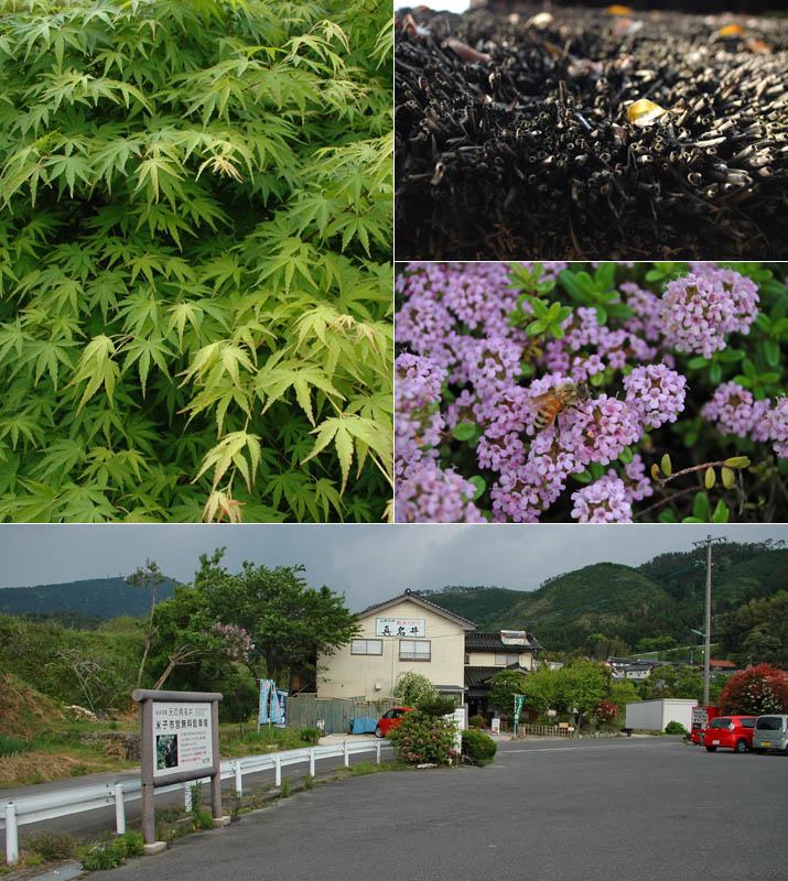 天の真名井 周辺の草木と駐車場.jpg